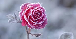 20191015192511-invierno.jpg